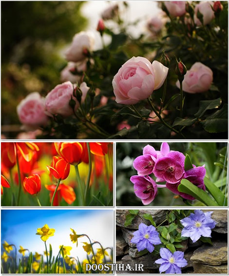 Beautiful Flowers Wallpapers