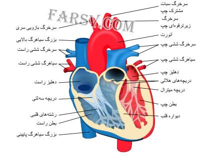 معجزه قلب