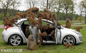 میمون ها و ماشینشان