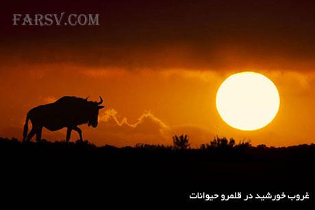 غروب خورشید در قلمرو حیوانات