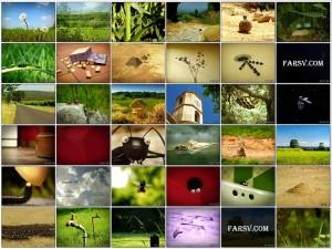 دانلود انیمیشن زندگی خصوصی حشرات Minuscule
