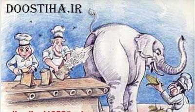 چس فیل