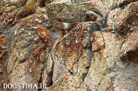 عکس های جالب از استتار حیوانات