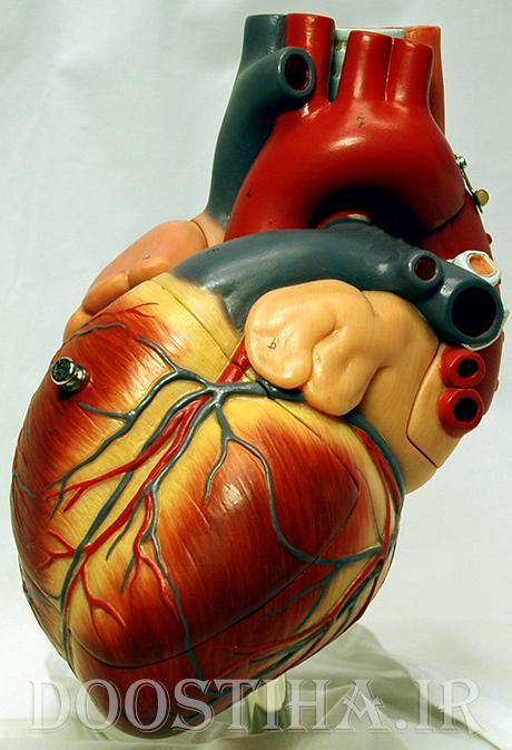 عکس متحرک از پمپاژ و تپش قلب
