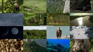 دانلود مستند حیات وحش فرانسه