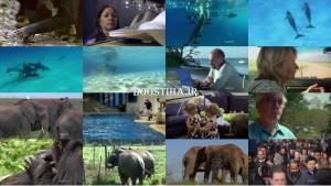دانلود مستند باهوش ترین حیوان