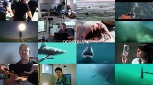 NOVA Why Sharks AttacK 2014