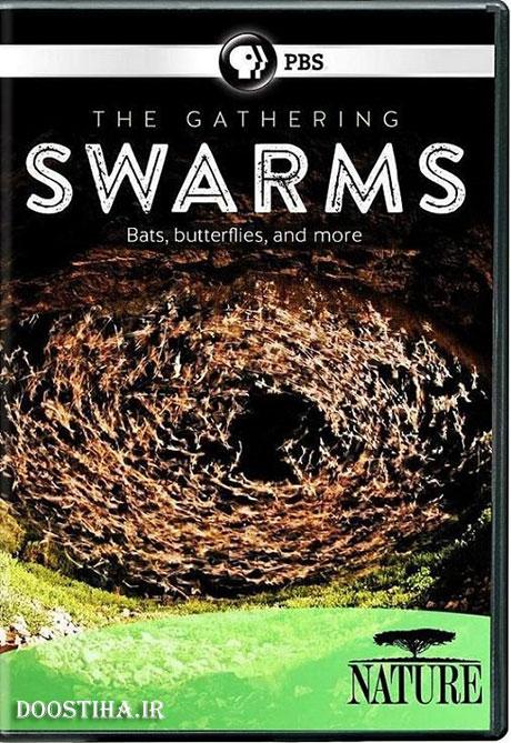دانلود مستند اجتماع حشرات The Gathering of Swarms 2014