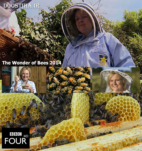The Wonder of Bees 2014