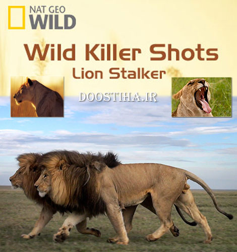 Wild Killer Shots: Lion Stalker