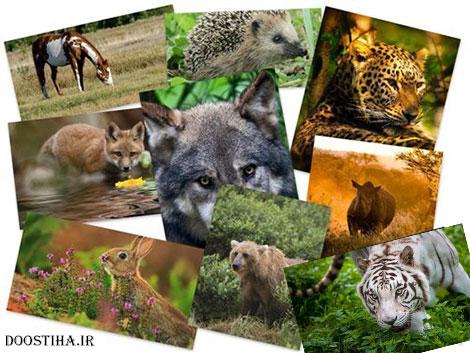 دانلود والپیپر حیوانات Beautiful Animals HD Wallpapers