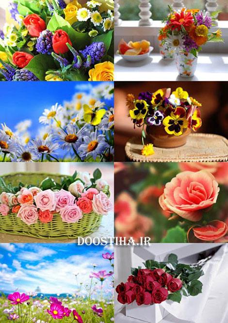 دانلود والپیپر گل های زیبا Beautiful Flowers Wallpapers