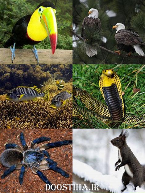 عکس حیوانات برای دسکتاپ World of Beautiful Animals Wallpapers