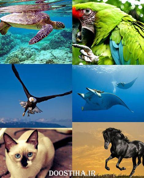 عکس های والپیپر از زیباترین حیوانات جهان