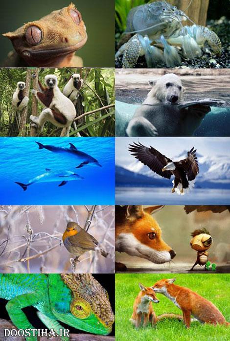 دانلود والپیپر حیوانات Animals Wallpapers
