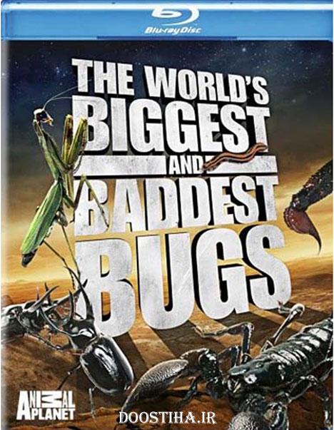 مستند بزرگترین و بدترین حشرات جهان World Biggest and Baddest Bug