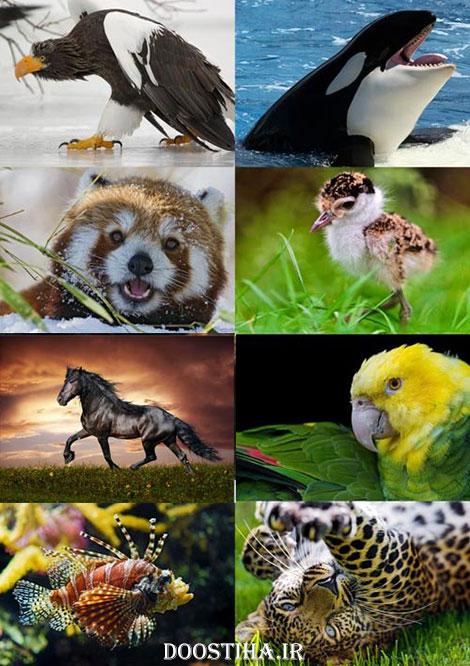 دانلود عکس های زیبا از حیوانات برای دسکتاپ