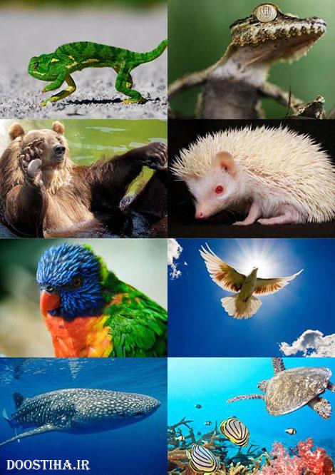 دانلود والپیپر با کیفیت از حیوانات World of Beautiful Animals Wallpaper