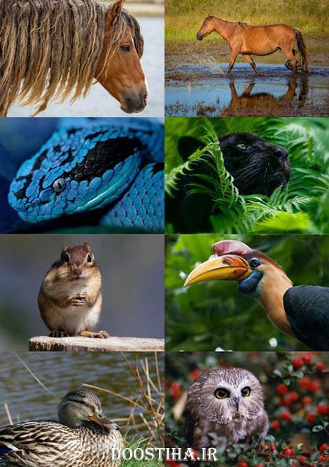 دانلود والپیپر حیوانات برای دسکتاپ World of Beautiful Animals Wallpapers