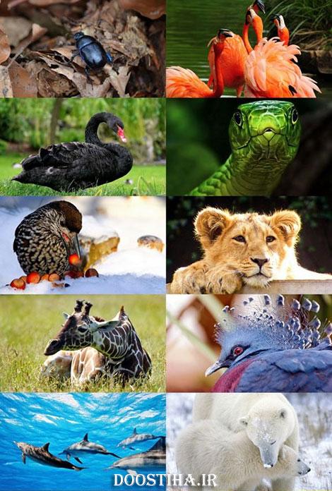 دانلود عکس و والپیپر از حیوانات زیبا
