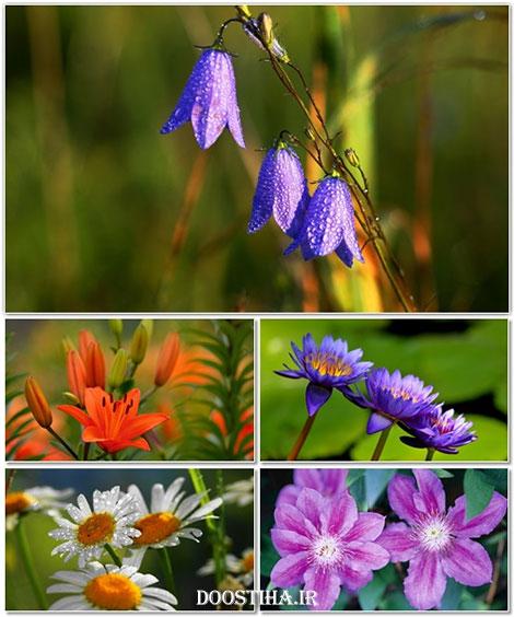دانلود والپیپر گل و کاعذ دیواری از گیاهان طبیعی