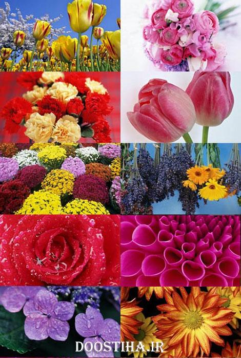 دانلود والپیپرهای بسیار زیبا از گل و گیاه Beautiful Flowers Wallpapers