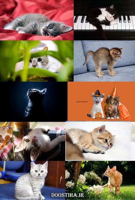 دانلود عکس های والپیپر از گربه و بچه گربه
