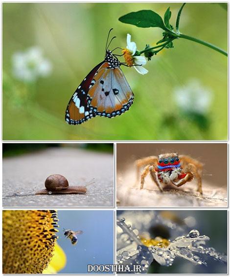 دانلود عکس های ماکرو مخصوص دسکتاپ Beautiful Macro Wallpapers