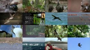 دانلود مستند Nature: Special Best of Birds 2014