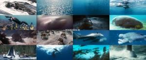 دانلود مستند اقیانوس ها Oceans 2009