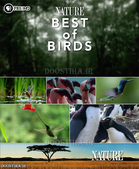 PBS - Nature: Special Best of Birds 2014