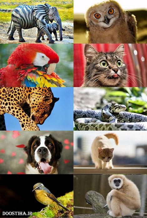 دانلود عکس و والپیپر فول اچ دی از حیوانات World of Beautiful Animals Wallpapers