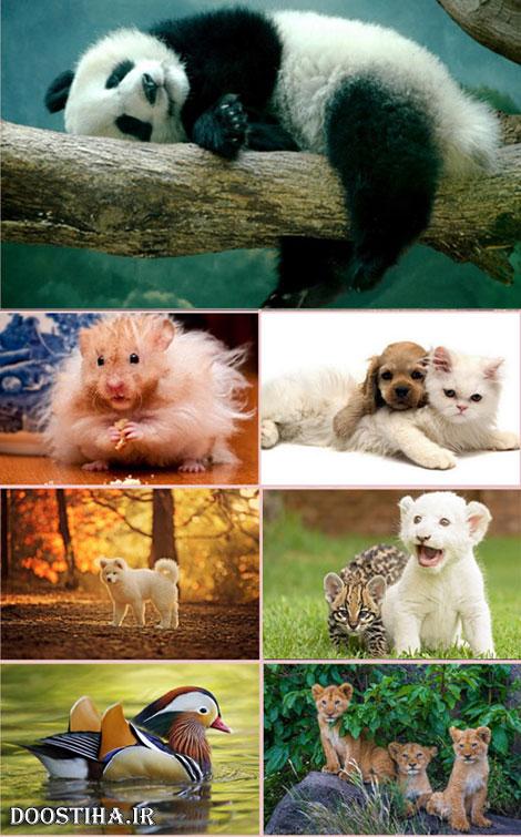 والپیپرهای زیبا از حیوانات Animals Wallpapers