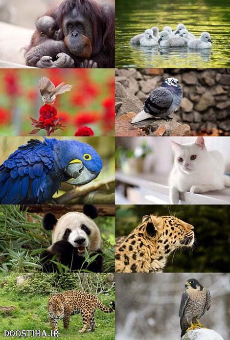 دانلود عکس و والپیپر حیوانات مخصوص دسکتاپ