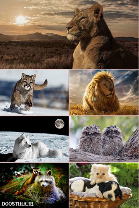 دانلود زیباترین والپیپر حیوانات برای دسکتاپ HQ Wallpapers Animal World