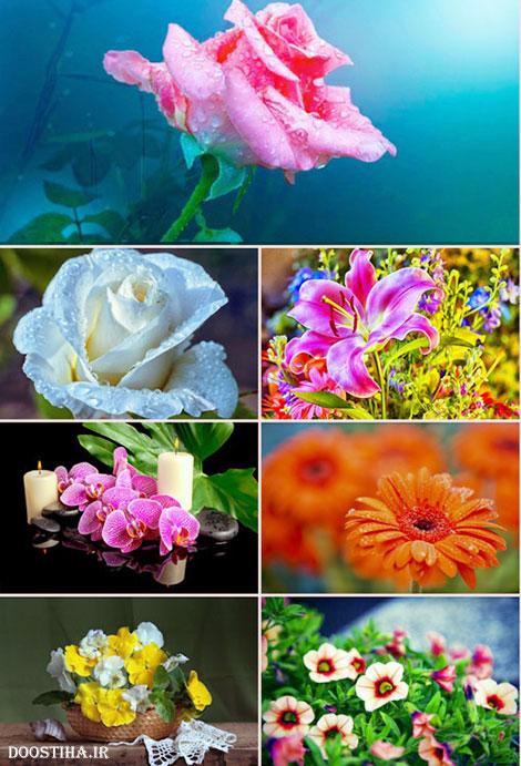 دانلود والپیپر زیباترین گلها با کیفیت بالا Flower Wallpapers