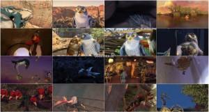 دانلود دوبله فارسی گلوری انیمیشن Zambezia 2012