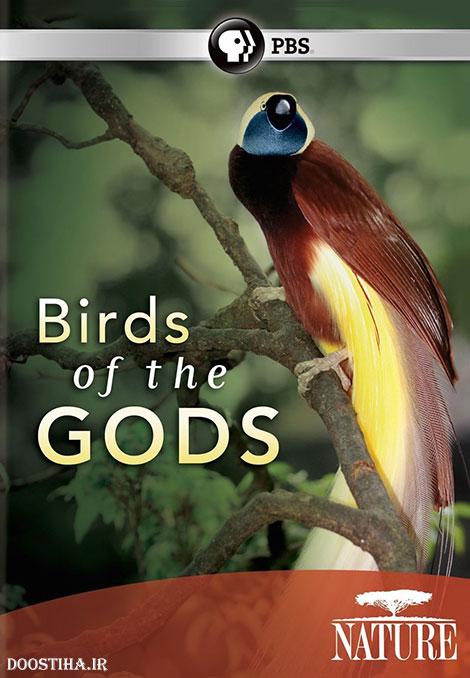 دانلود مستند پرندگان بهشتی با دوبله فارسی Birds of the Gods 2011