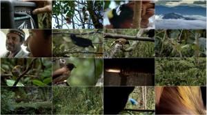 دانلود دوبله فارسی مستند Birds of the Gods 2011
