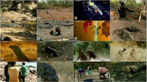 دانلود دوبله فارسی مستند اژدهای مرگبار Killer Dragons 2012