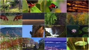 مستند Nature's Colors with the World's Greatest Symphonies