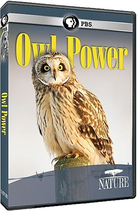 دانلود مستند قدرت جغد PBS - NATURE: Owl Power 2015