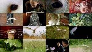 دانلود مستند نیروی جغد PBS - NATURE: Owl Power 2015