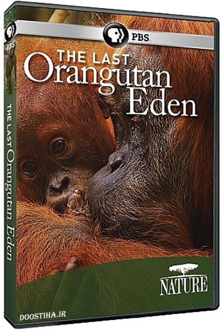 دانلود مستند آخرین اورانگوتان عدن The Last Orangutan Eden 2015