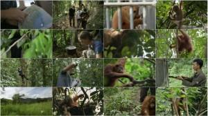 دانلود مستند PBS - NATURE: The Last Orangutan Eden 2015