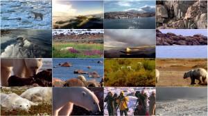 دانلود مستند Polar Bears: A Summer Odyssey 2012