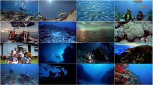 دانلود مستند صخره های مرجانی IMAX: Coral Reef Adventure 2003