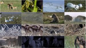 دانلود قسمت هفتم مستند سیاره زمین