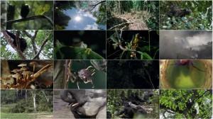 دانلود قسمت هشتم مستند سیاره زمین