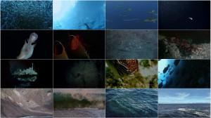 دانلود قسمت یازدهم مستند سیاره زمین